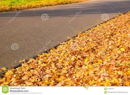 Colorful fall leaves along walkway in the sun 582