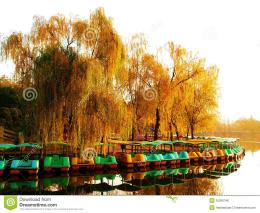 lot of the boat docked at golden tree shipside in autumn, the photo 751