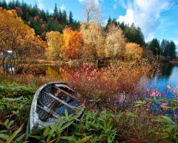 River, forest, autumn, trees, house, broken boat Wallpaper | 1280x1024 772