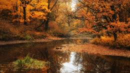 Nature Water Tree River Forest Autumn Fog Fall 1504