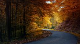 Fondo de pantalla Autumn Road In The Forest Yellow Trees Red Leaves 711