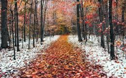 Download Autumn road with red leaves High quality wallpaper 1916