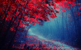 red leaves forest road trees autumn mist trail jpg 1448