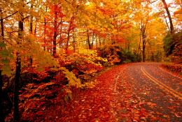 Fallen Leaves, autumn, gold, leaves, orange, red, road, trees 74302 781