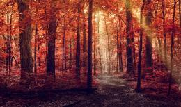 forest, autumn, road, footpath, light, rays, trees, leaves, red 611