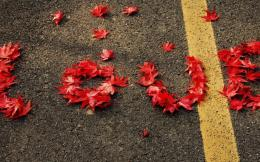 Love message on the roadred autumn leaves 484