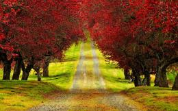 Red Trees On Autumn Road Nature New hd wallpaper #1841508 931