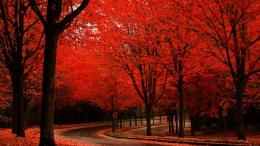 Red Autumn Road Tree Scenic Fall Rede Of hd wallpaper #1587178 1337