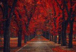 Red autumn road alley nature leaves fsll of HD Wallpaper 482