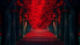 Red Leaves Covered Road Beautiful Autumn Landscape Wallpaper 924