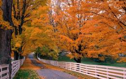 Road in autumn trees red leaves fences time 1280x800 1602