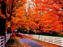 Road in autumn trees red leaves fences time:High Contrast 361