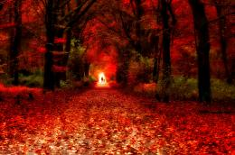 Red road nice fall leaves beautiful shine HD Wallpaper 563