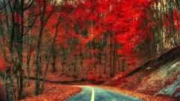 Autumn road trees foliage red leaves 1920x1080 jpg 224