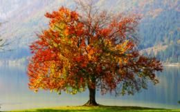 autumn tree 1920 774