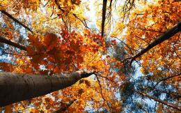 Autumn Trees Leaves Wallpapers2560x16003332310 785
