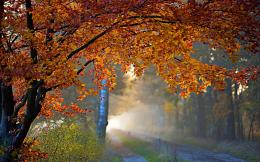 Autumn tree foliage road Wallpapers Pictures Photos Images 1451