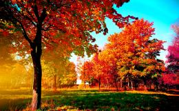 Autumn TreesWallpapers 1456