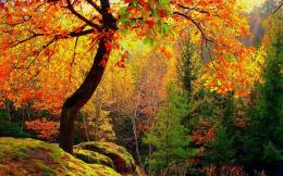 Colorful Autumn TreesWallpaper #44829 1772