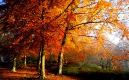 Autumn SceneryRandom Photo35926731Fanpop 1698