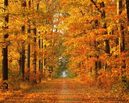 Nature Wallpapers: Amazing Autumn Tree Wallpaper 704