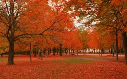 Beautiful Autumn Trees Wallpapers2560x16002452523 420