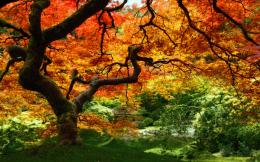 autumn leaves forest trees 324