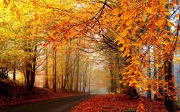 Trees, Leaves Turning Yellow, What an Uncomparable Scene – Autumn 782