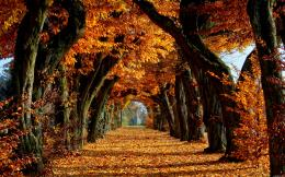 Fall Autumn Trees Leaves Hd 1994427 With Resolutions 2560×1600 Pixel 1748