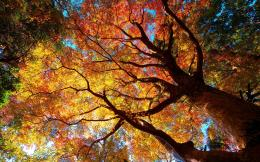 Autumn tree Wallpapers Pictures Photos Images 1601