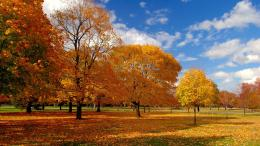 Fall trees wallpaper #11526 407