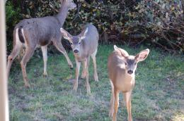 There are huge bucks, tiny babies and does in all sizes! 1500