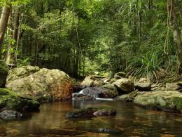File Name : jungle at northern australia wallpaper 1600x1200 1889
