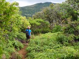 Top Trails: Hiking on Maui 145