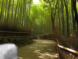 private Guide: How about walking along the path in Bamboo forest 1094