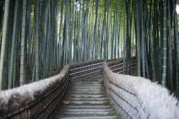 Bamboo walk at Adashino Nenbutsu ji temple, Kyoto japan 847
