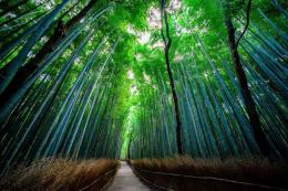 Bamboo Path, Japan – by Alex Chen – wkc 1 :Flickr 1214