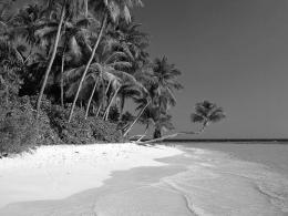 Black and White Wallpapers: Black and White Beach Landscape HD 596