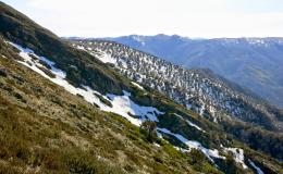 Mountains: Mt Feathertop, Vic, Australia 1576