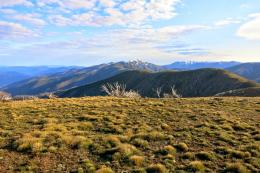 Walking on top of the Razorback Ridge towards Mt Feathertop 226