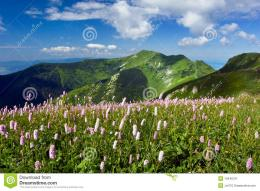 Summer meadow and beautiful mountain landscapeLittle Fatra hills 210