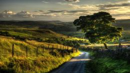Beautiful countryside road hdr fields tree 2560x1440 1337