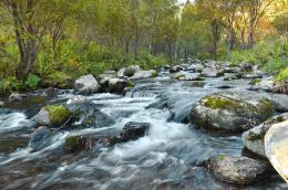 Fast Flowing River Free Stock Photo HD Public Domain Pictures 1358
