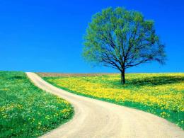 beautiful Spring Day on a country roadSpring Photo13476165 334