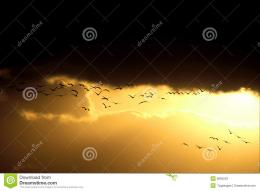 Birds Flying In Sunset Stock PhotosImage: 9660533 928