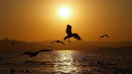 186756 Birds Flight In Sunset Wallpaper Hd image background 1201