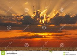 Bird flying over a beautiful bright red sunset over the sea 712