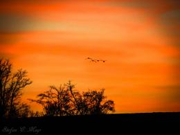 Birds Flying To the Sunsetby StefanMayr on DeviantArt 1590