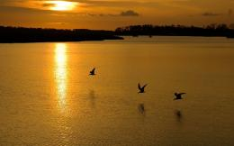 Download Birds flying in the sunset wallpaper 902