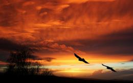 Birds Silhouette Sunset Orange sky flight animals landscapes clouds 1776
